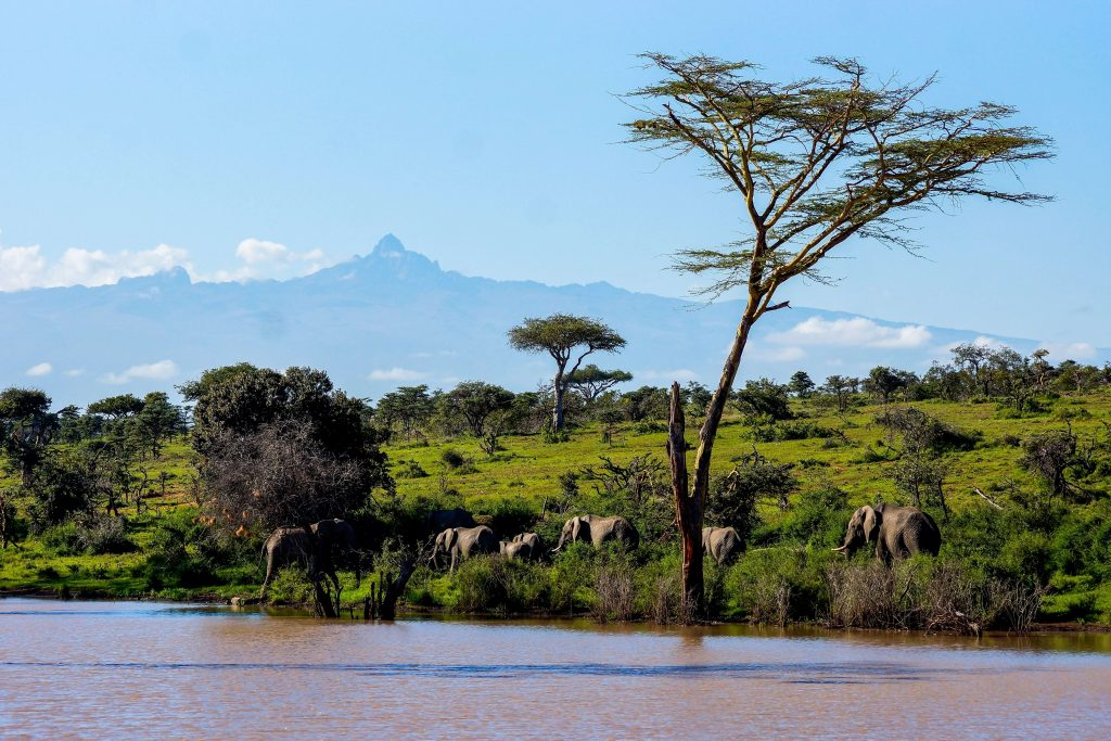 best places to visit in Africa: Mount Kenya with elephants